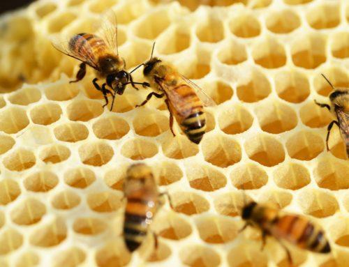 """""""Was uns Bienen lehren"""""""